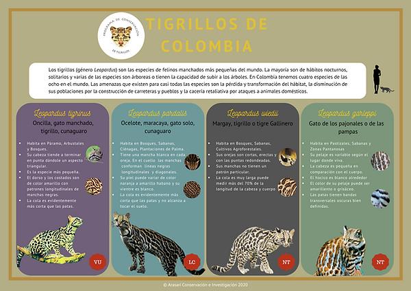 Tigrillos de Colombia.png