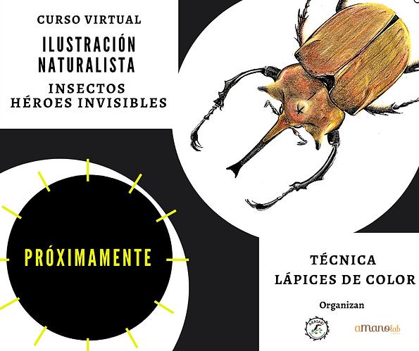 Curso de ilustración naturalista de insectos