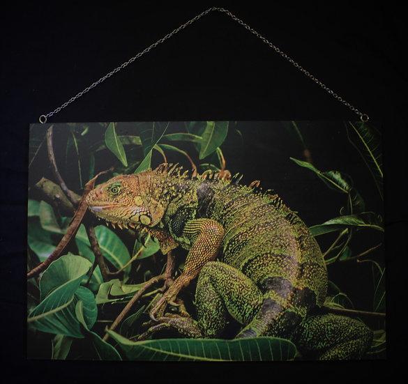 Fotografía Iguana