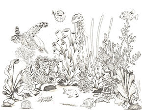 coral_rotated_page-0001.jpg