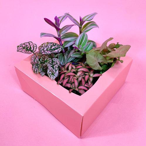 Mini Pink Pack