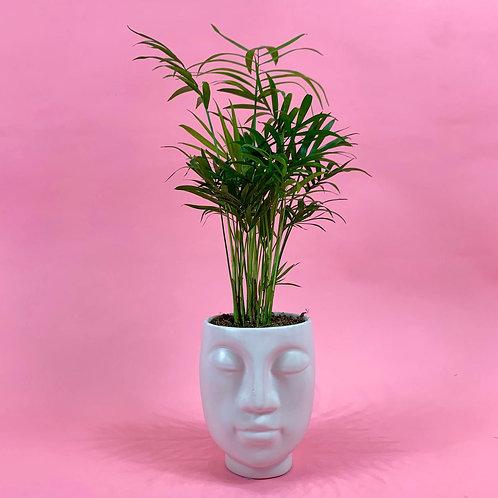 Face Pot & Palm