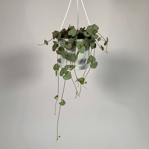 String Of Hearts In Hanging Pot