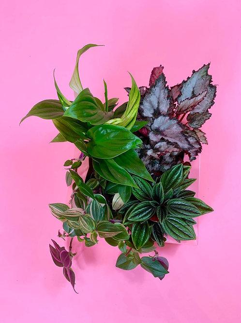 Little Plant Pack