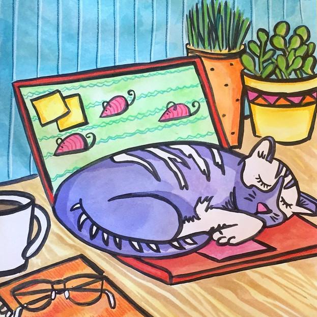laptop cat.jpeg