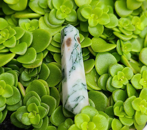 Tree Agate Point