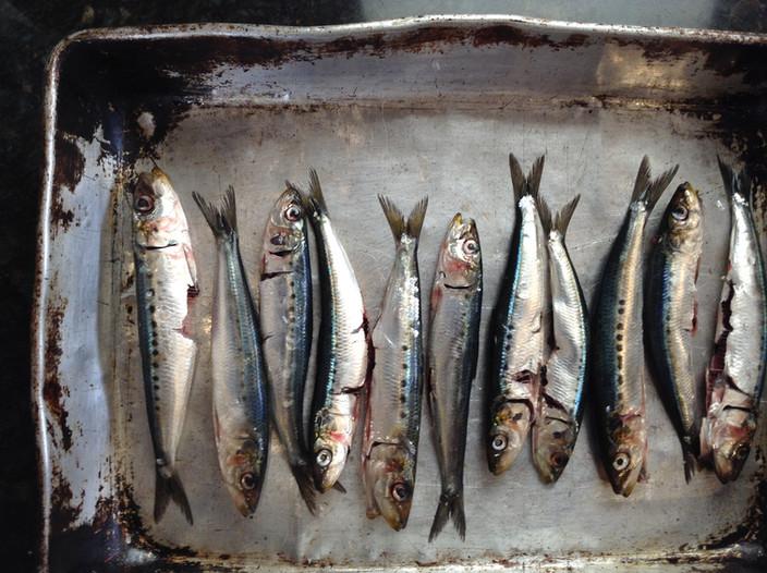 Easy Fish Recipe: Fried Sardines