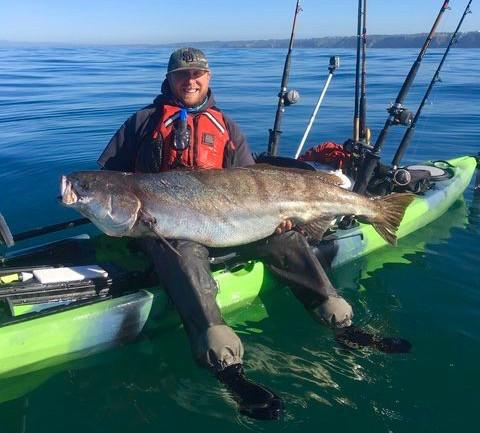 La Jolla White Sea Bass