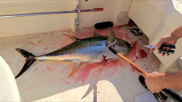Tuna Sliders Asian Style