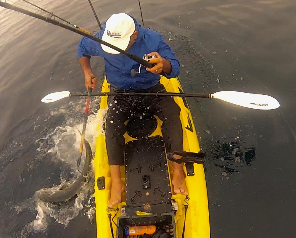 fresh caught yellowtail