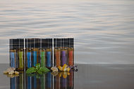 10ml-grouped-flowers_edited.jpg