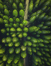 Naturel Ahşap Yapı Olarak Doğadan ilham alıyor, çalışma bilincimizi çevreye duyarlı bireyler olarak sürdürülebilir yaşam üzerine kuruyoruz.