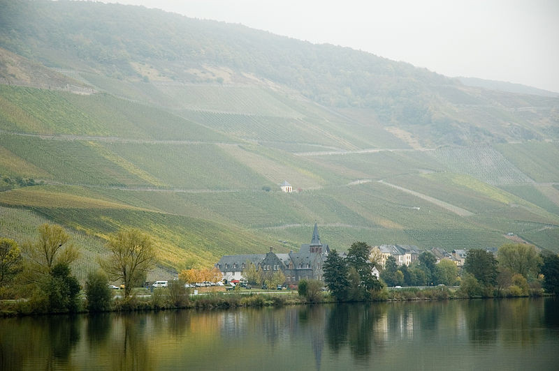 Vineyard GraacherHimmelreich, Mosel