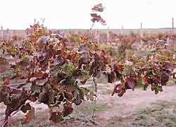 Six Foot Six 2: its Shiraz and Pinot Noir