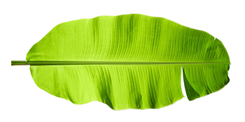 banana-leaf.png