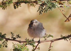 front-bird