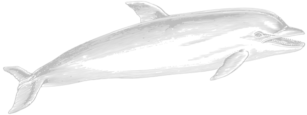 Dolphin-.png