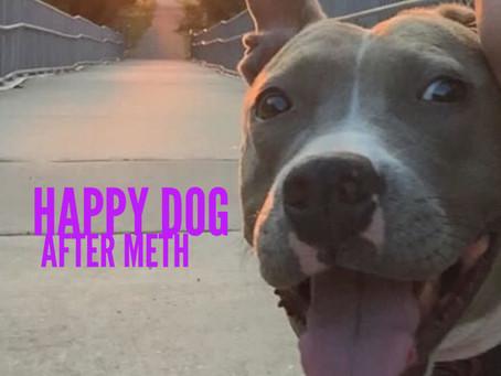 Happy Dog After Meth