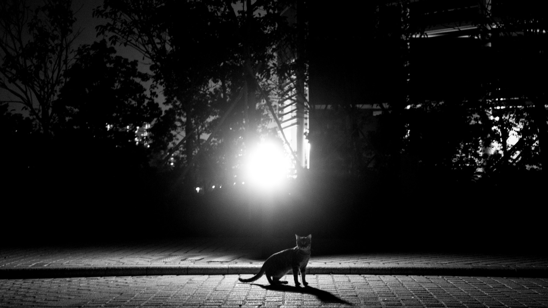 We are night cats