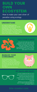 Infographic with steps on how to build your own ecosystem.
