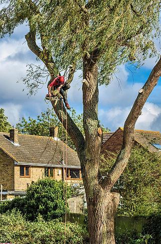 Tree Pic For Site #8 crain shot.jpg