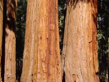 EUA - California - Parque Nacional das Sequoias