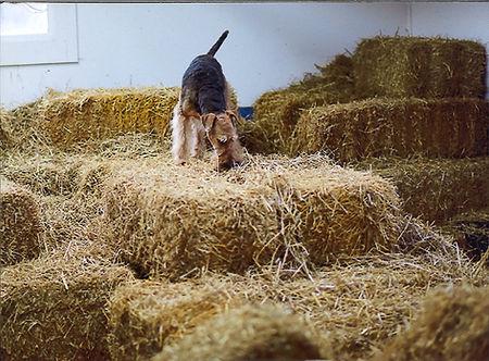 Asher barnhunt.jpg