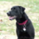Geauga County Dog Training