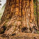 Redwoods%201%2050%25_edited.jpg