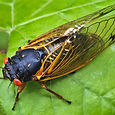 Cicadas%201_edited.jpg