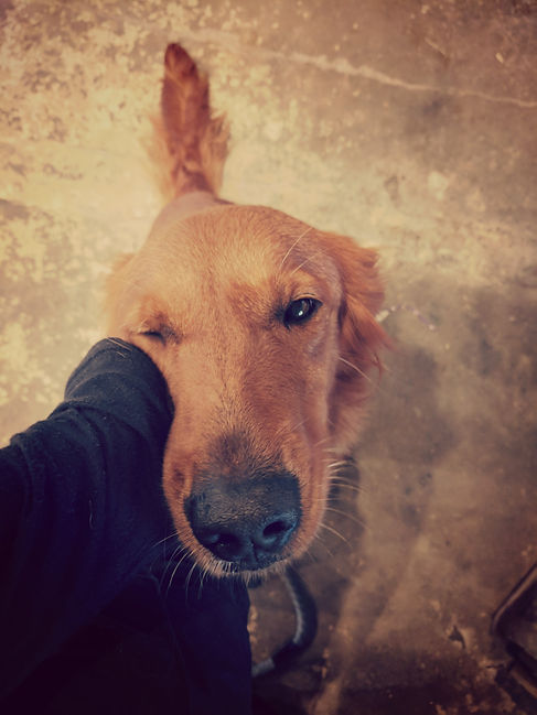 Boarding, Dog Training, Field Trials, Hunt Tests, Gun Dog, Service Dog, Dog Training