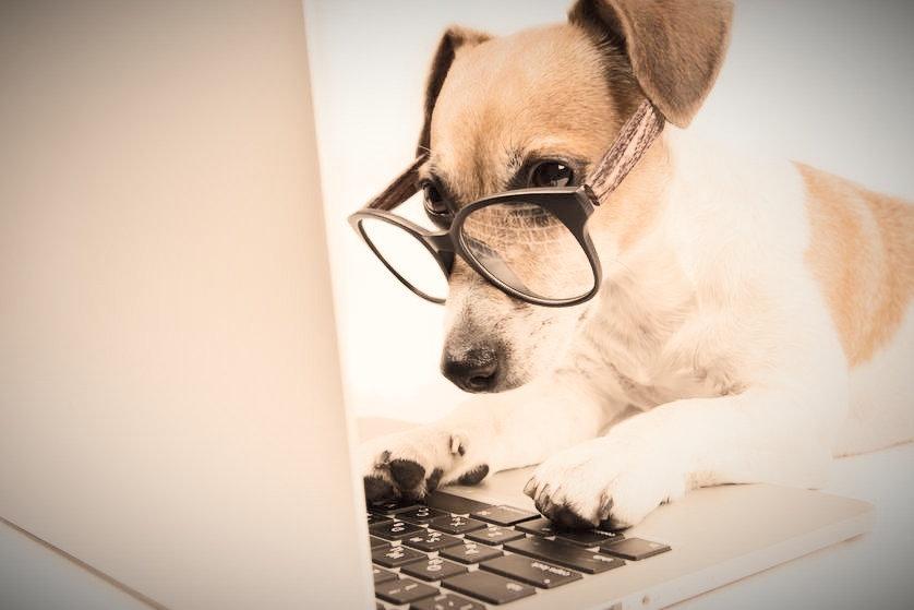 dog%20on%20computer.jpg_edited.jpg