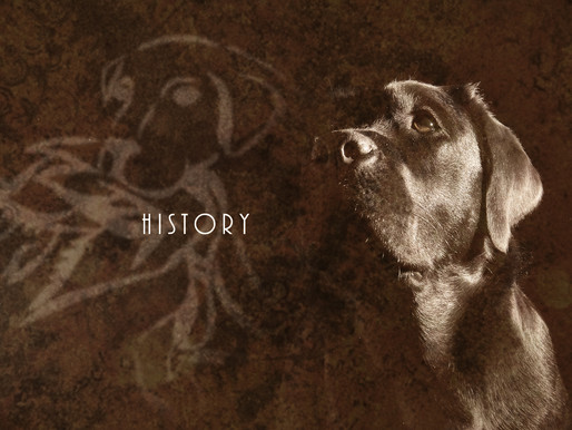 History of Mill Pond Kennels