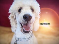 ASTRO, standard poodle