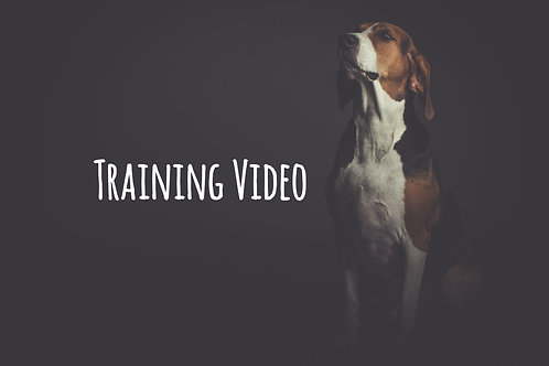 1 on 1 Dog Training Solution Video