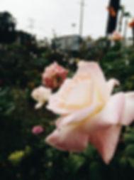 urban-rose-garden_4460x4460.jpg