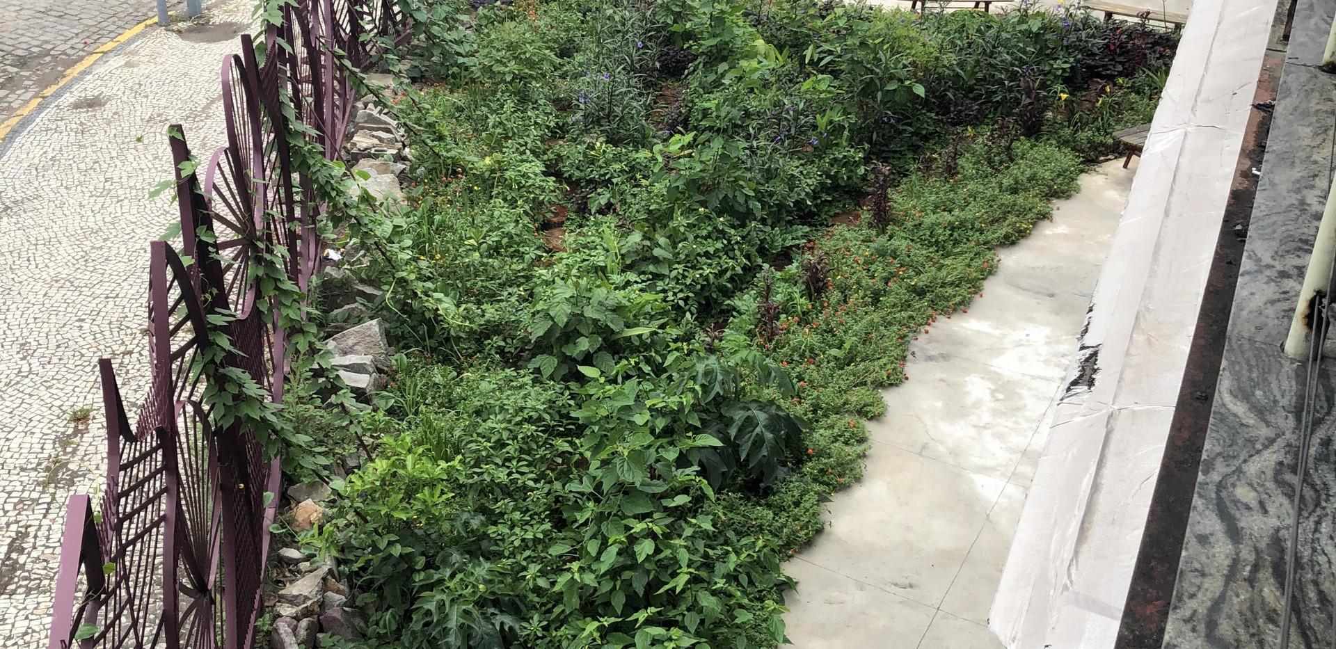 Jardim de Chuva