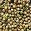 Thumbnail: Conjunto de Broticultura
