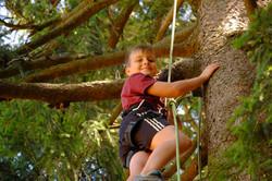 Activité grimpe arbre