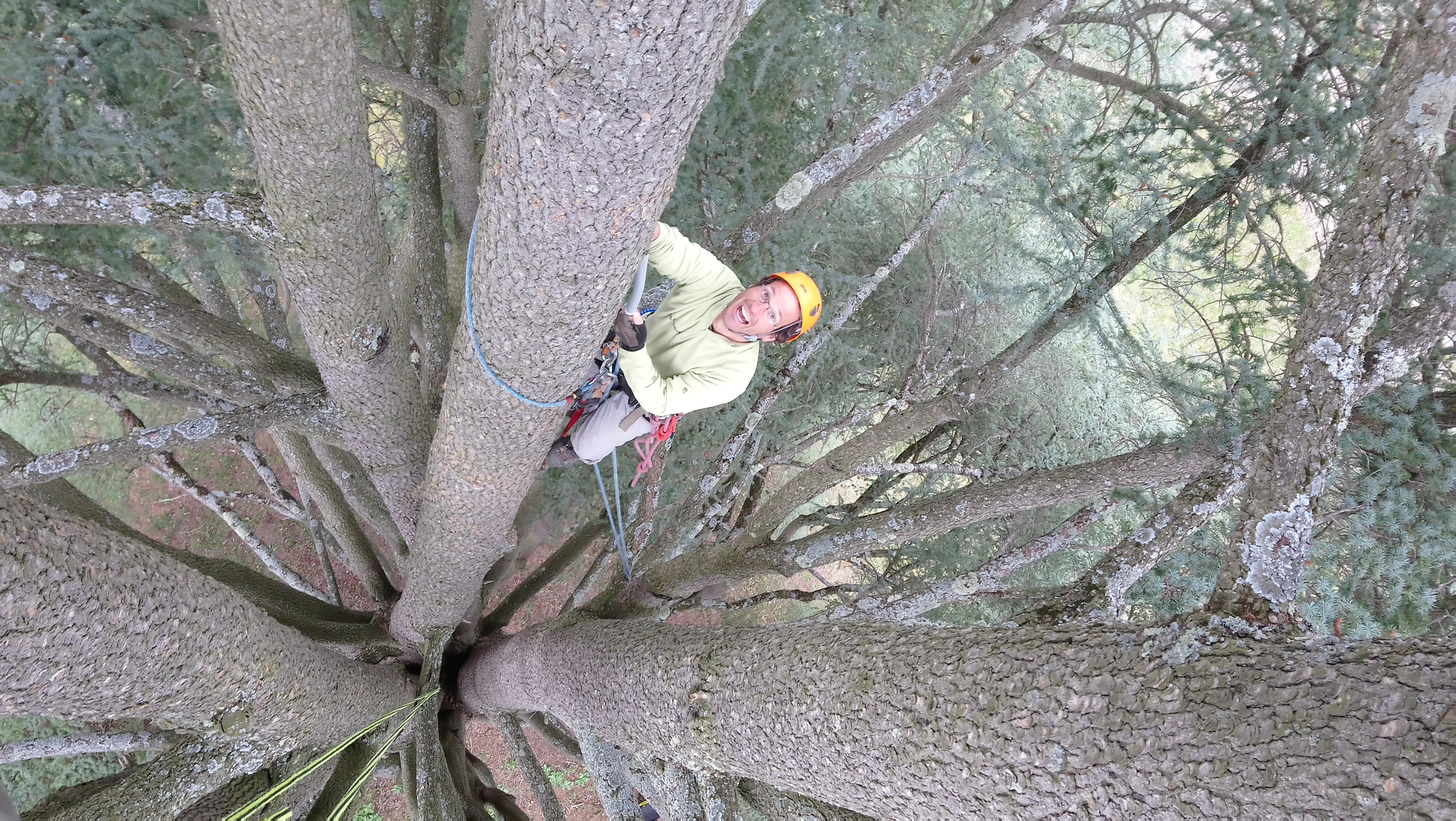 Escalade arbre géant