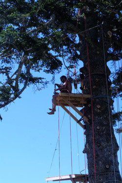Evénement grimpe arbre