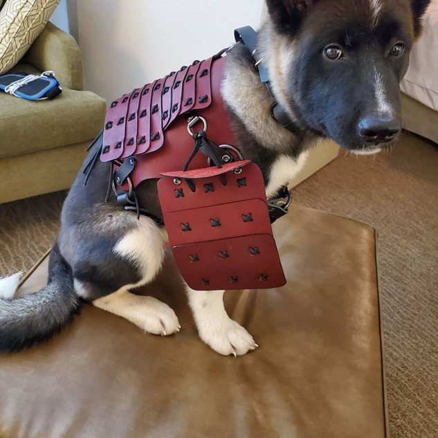 Dog Armor (Model: Logan)
