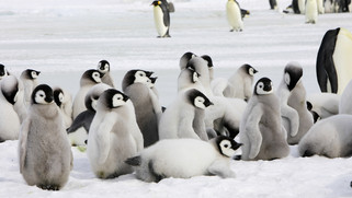 Unsere Inspiration: Die Pinguine