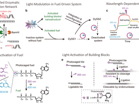 Multiple Light Control Mechanisms in ATP‐fueled Non‐Equilibrium DNA Systems