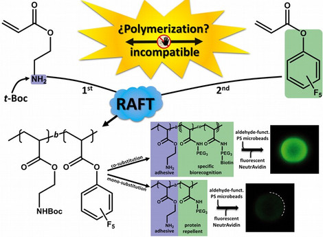 Combining the incompatible: Block copolymers sequentially displaying amines and activated esters and