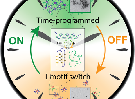 Temporal control of i-motif switch lifetimes for autonomous operation of transient DNA nanostructure