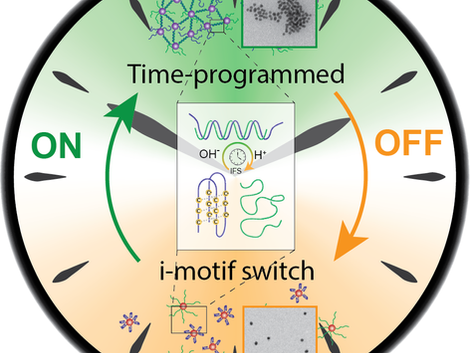 Temporal control of i-motif switch lifetimes for autonomous operation of transient DNA nanostructure