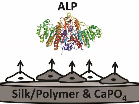 Biomineralization of Engineered Spider Silk Protein-Based Composite Materials for Bone Tissue Engine