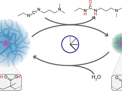 Chemically Fueled Volume Phase Transition of Polyacid Microgels