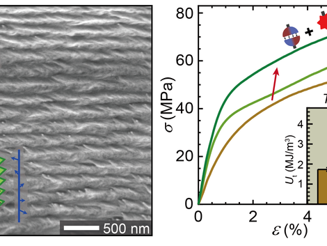 Hierarchical cross-linking for synergetic toughening in crustacean-mimetic nanocomposites†